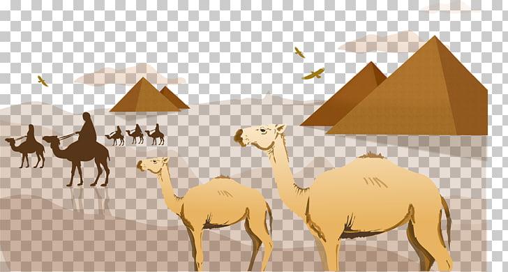 Sahara arabian pyramids . Desert clipart camel egyptian
