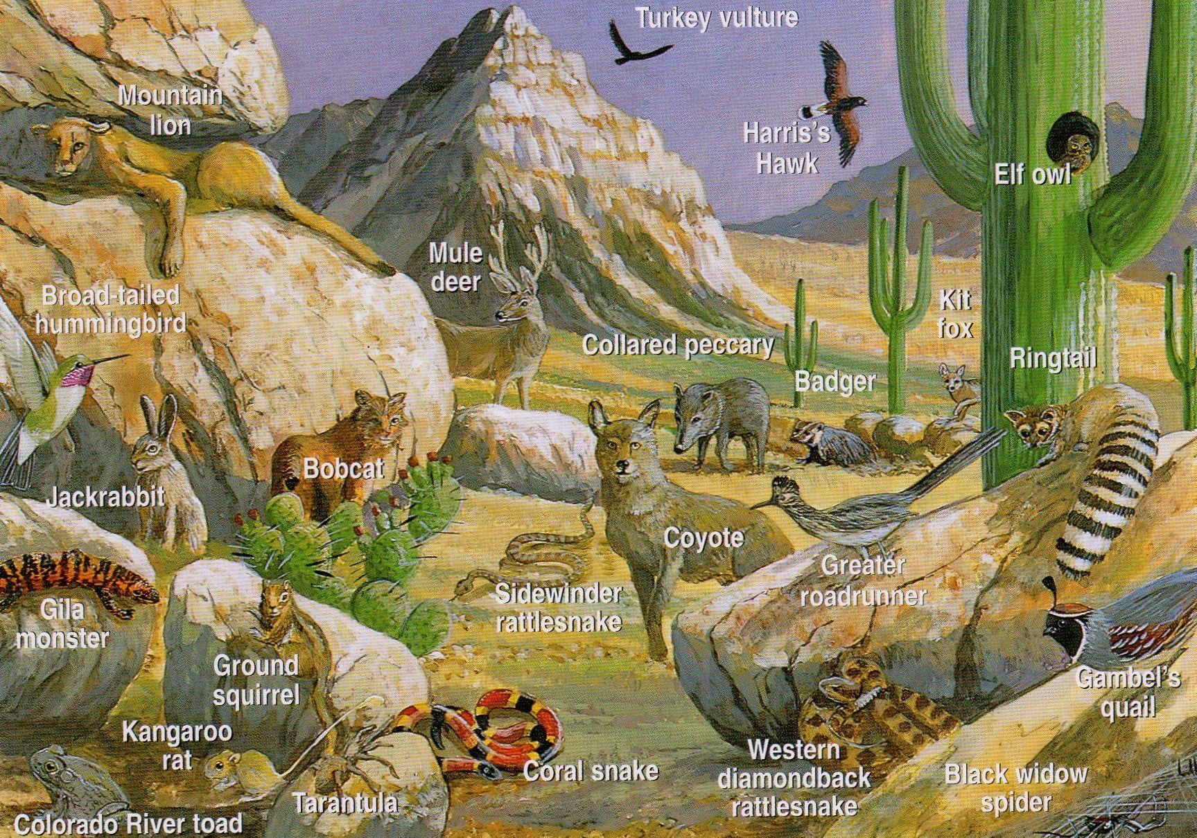 Desert clipart desert ecosystem. Animals first one biome
