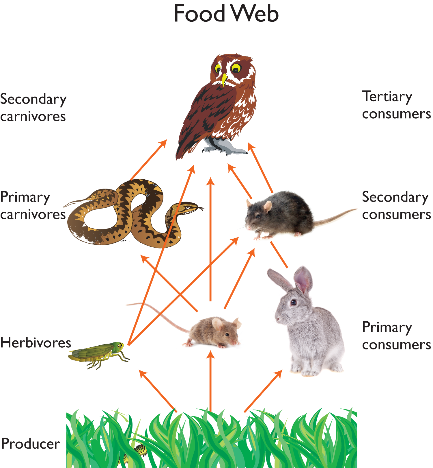 Owl food web science. Desert clipart ecosystem arctic