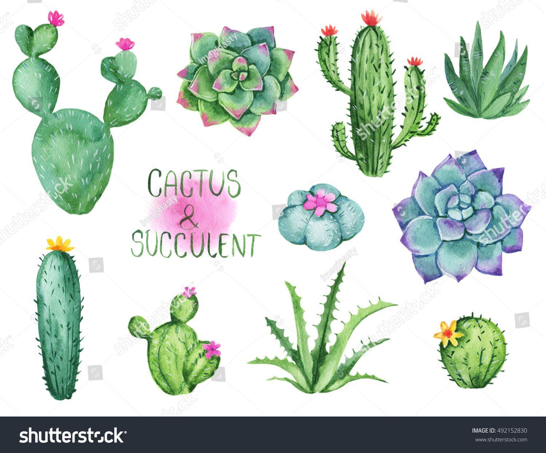 Desert clipart nopale. Cactus and succulent watercolor