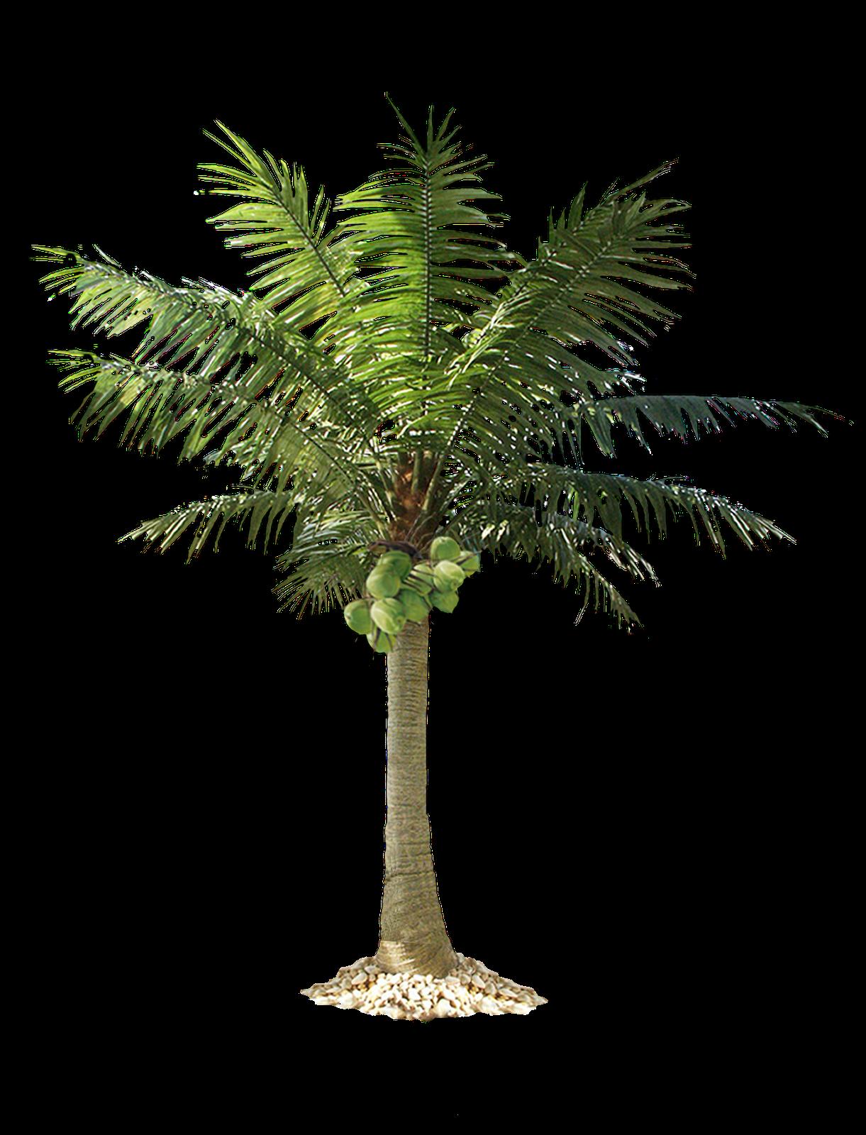 Desert clipart palm tree desert. Png image