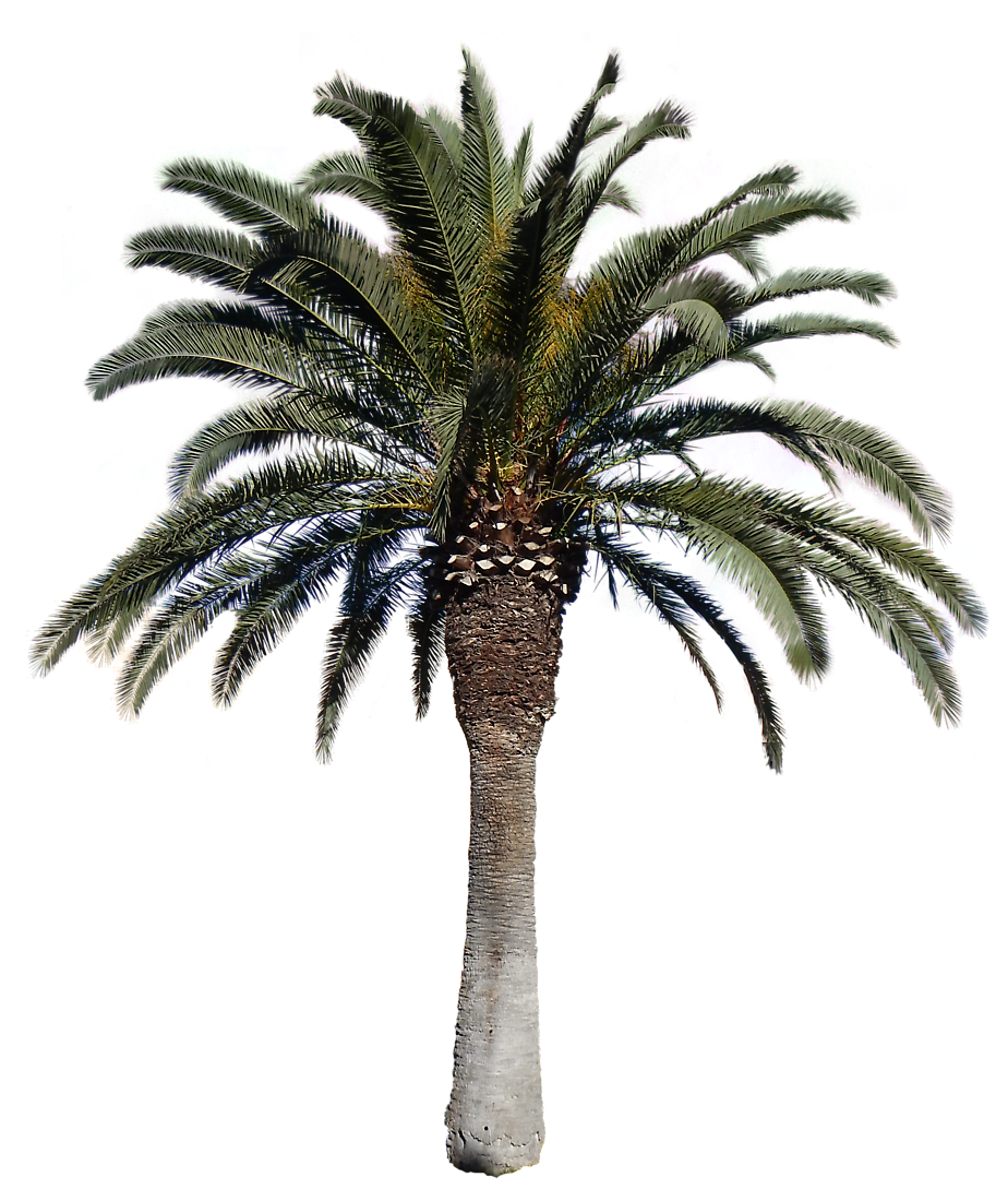 Transparent png pictures free. Desert clipart palm tree desert