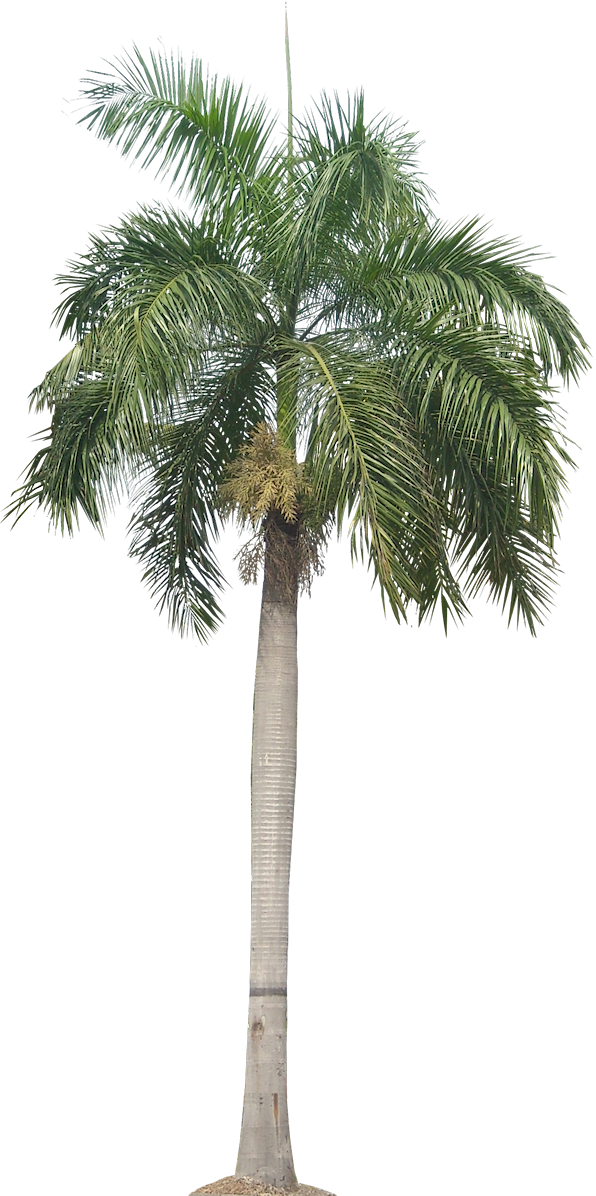 Desert clipart palm tree desert. A collection of tropical