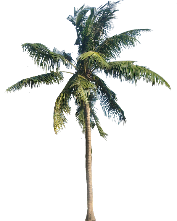 A collection of tropical. Desert clipart palm tree desert