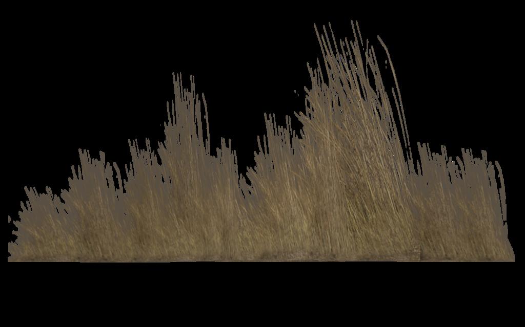 Desert clipart savannah. Tall grass transparent png