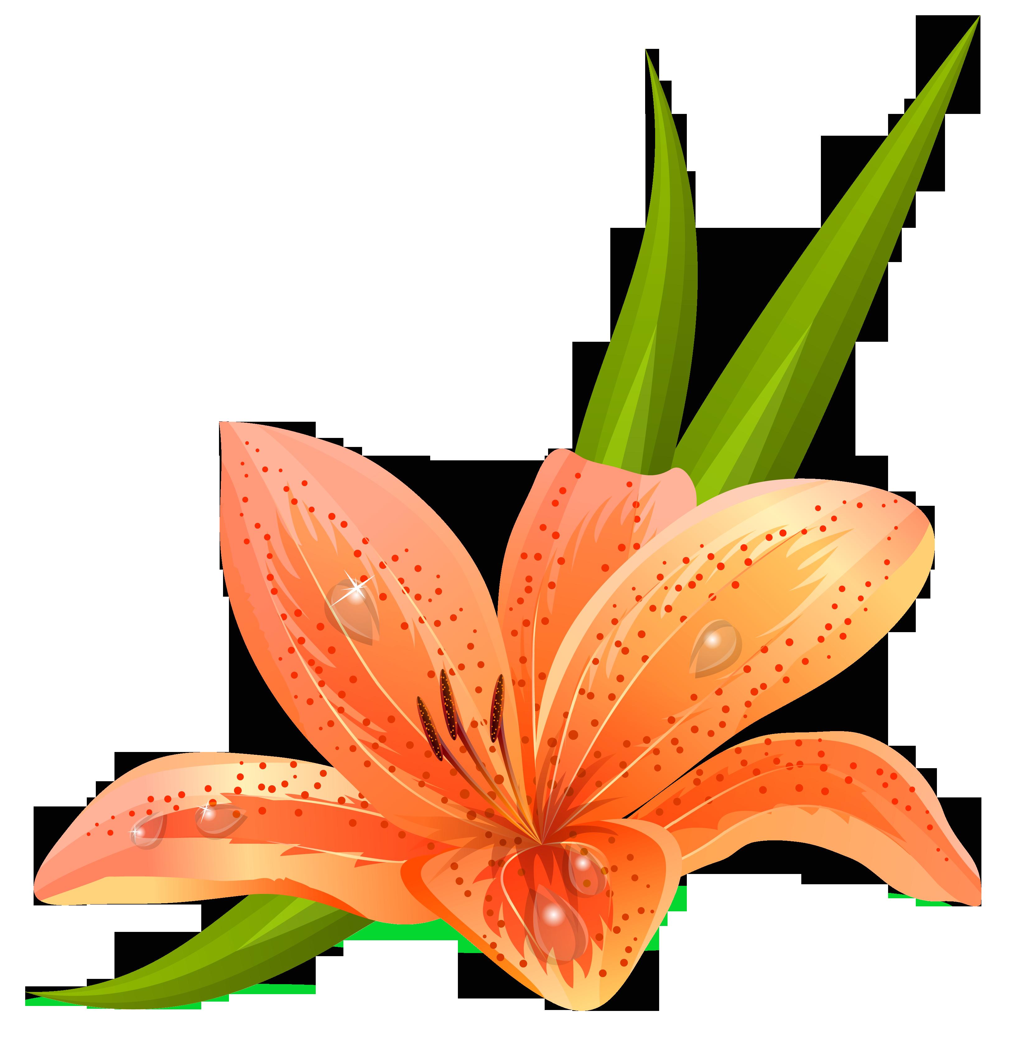 Lilium png picture gallery. Design clipart orange