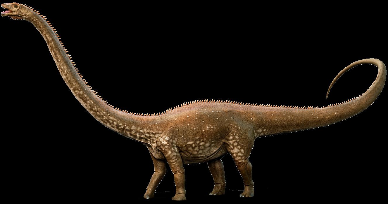 Dinosaur clipart apatosaurus. Pictures jurassic land diplodocus