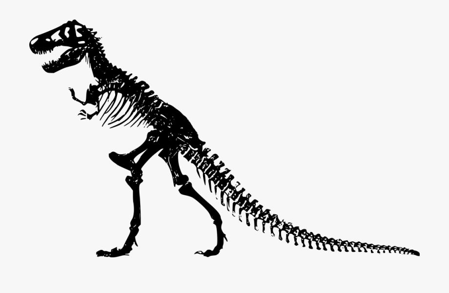 Dinosaur clipart dinosaur skeleton. Bones panda free images