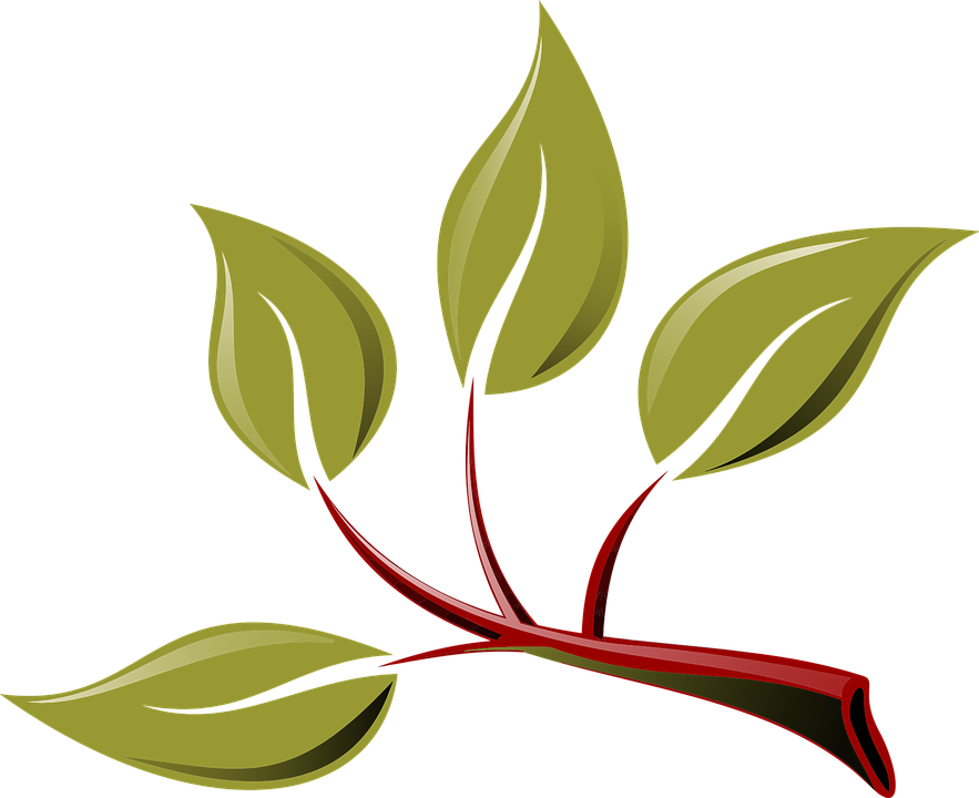 Tree branch shop of. Dirt clipart plant