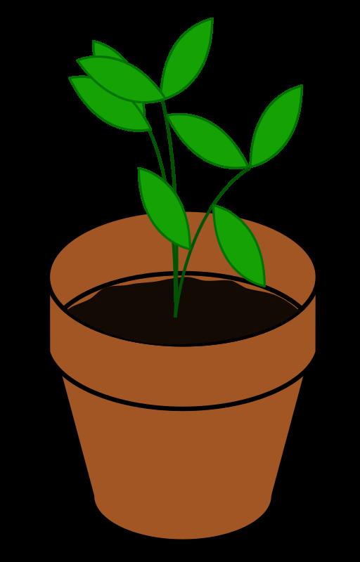 Terracotta medium image png. Gardening clipart plant seedling