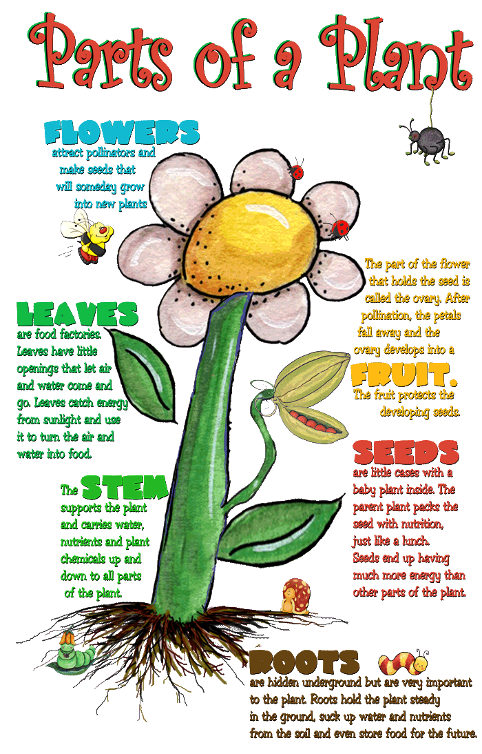 Dirt clipart small plant. Interactive parts of the