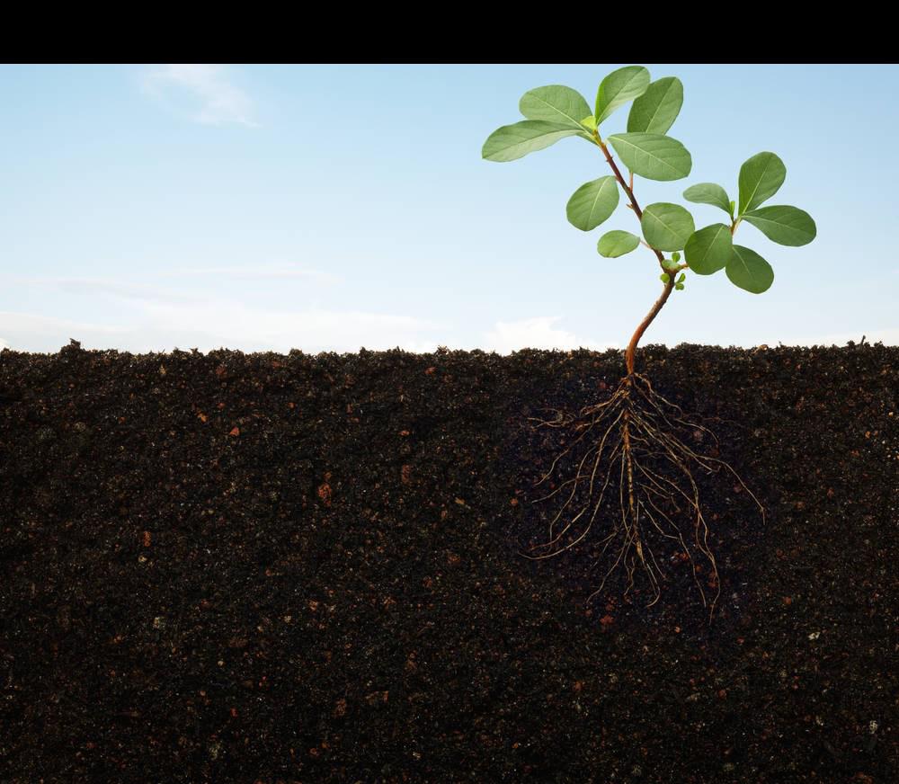Varuna organics pvt ltd. Dirt clipart soil fertility