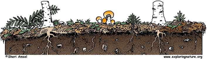 Dirt clipart soil fertility. The on why is