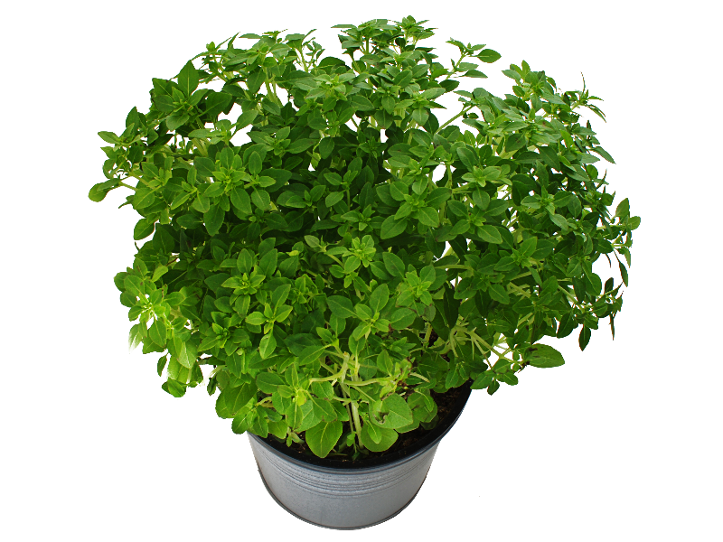 Dirt clipart terrestrial plant. Potted with green leaves