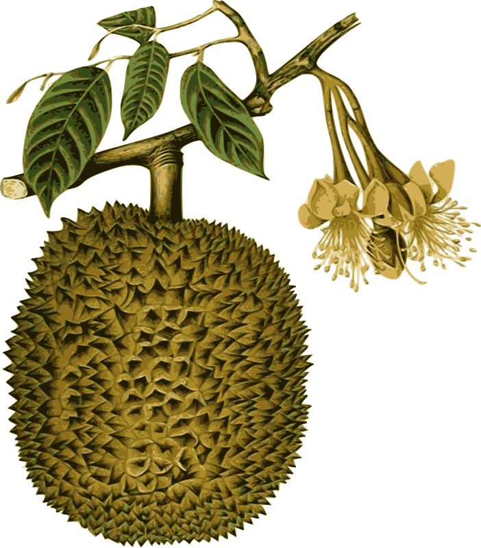 Dirt clipart terrestrial plant. High quality easy to
