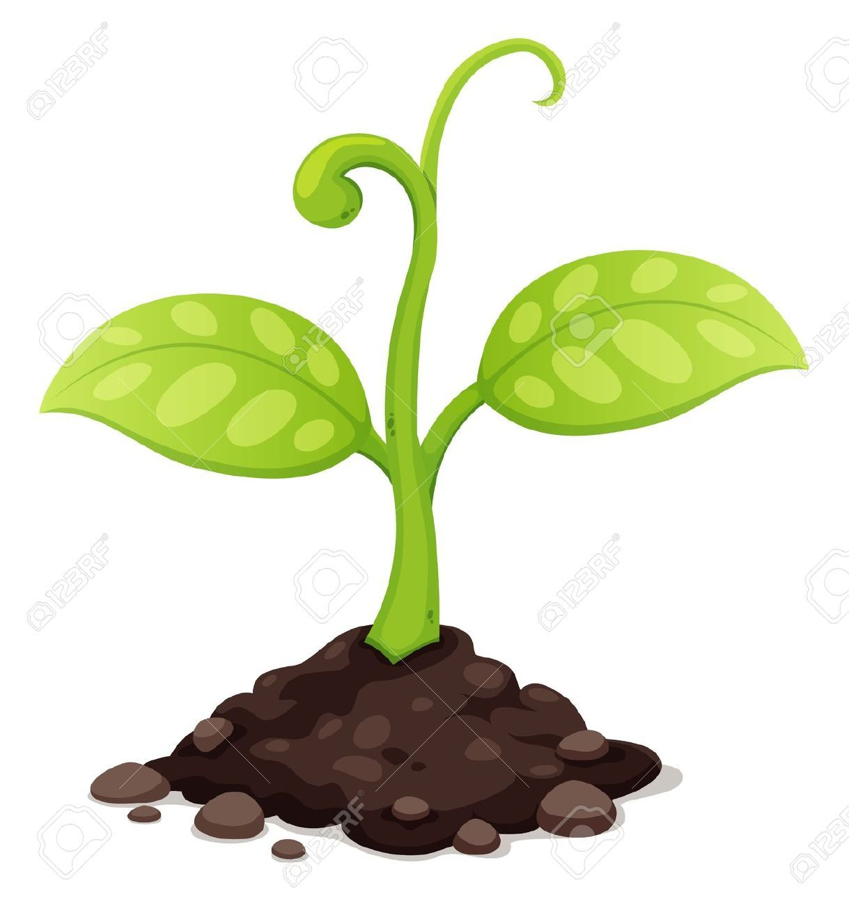 Seed growing images stock. Planting clipart rich soil