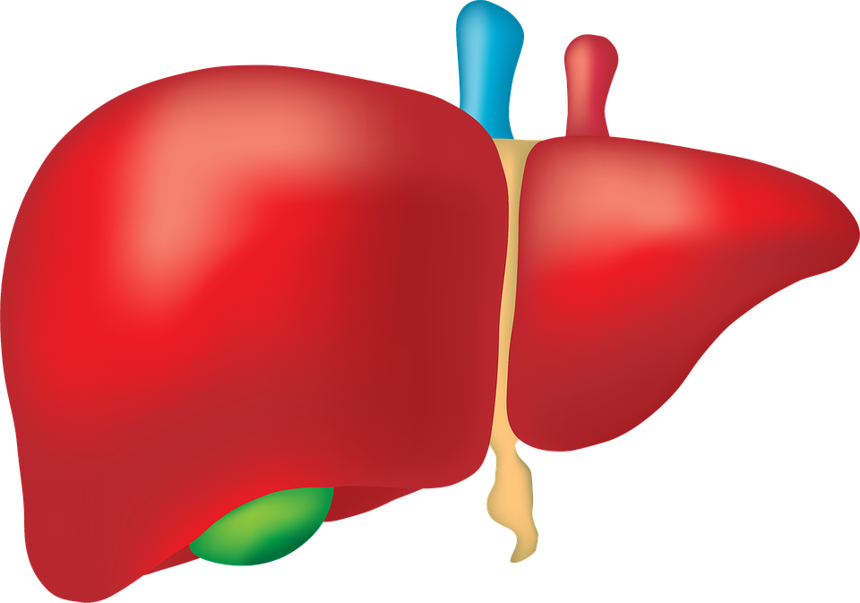Global non alcoholic fatty. Liver clipart liver damage