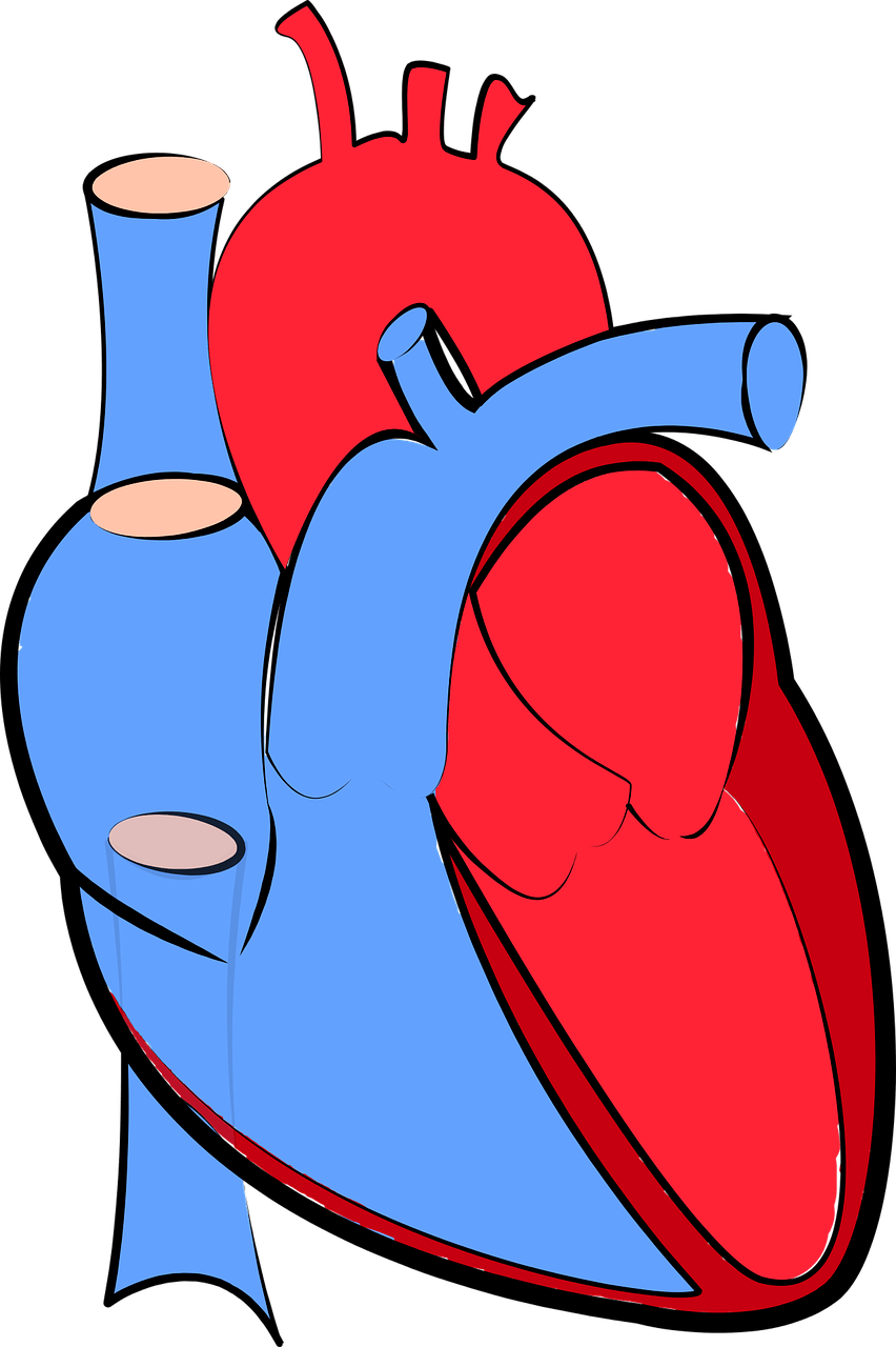 Researchers discover a protein. Disease clipart cardiac