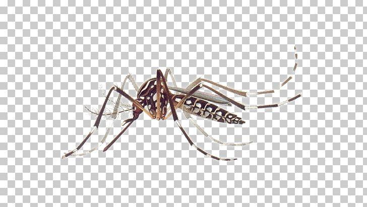 Disease clipart chikungunya. Yellow fever mosquito dengue