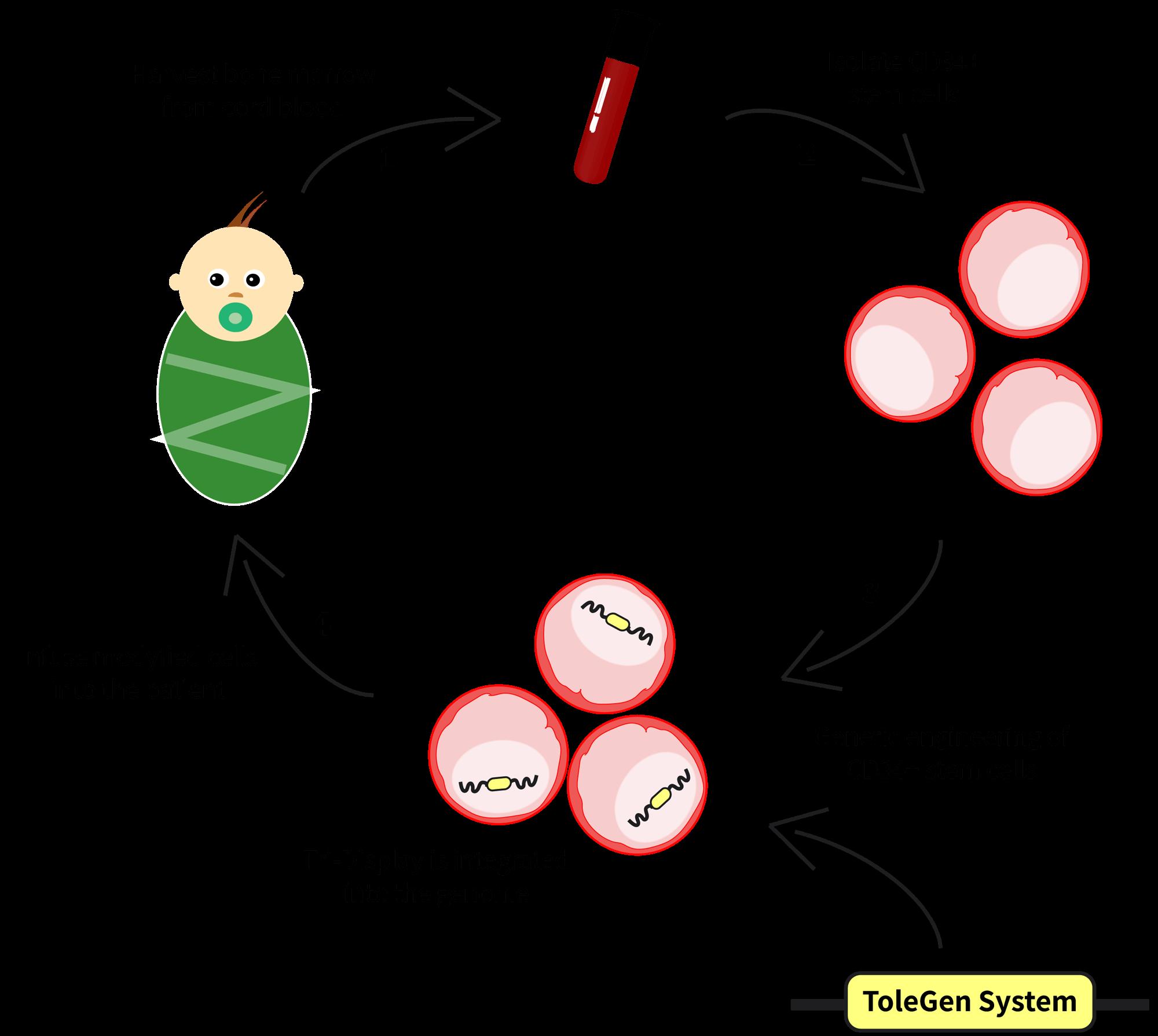 Team technion israel description. Disease clipart immune system