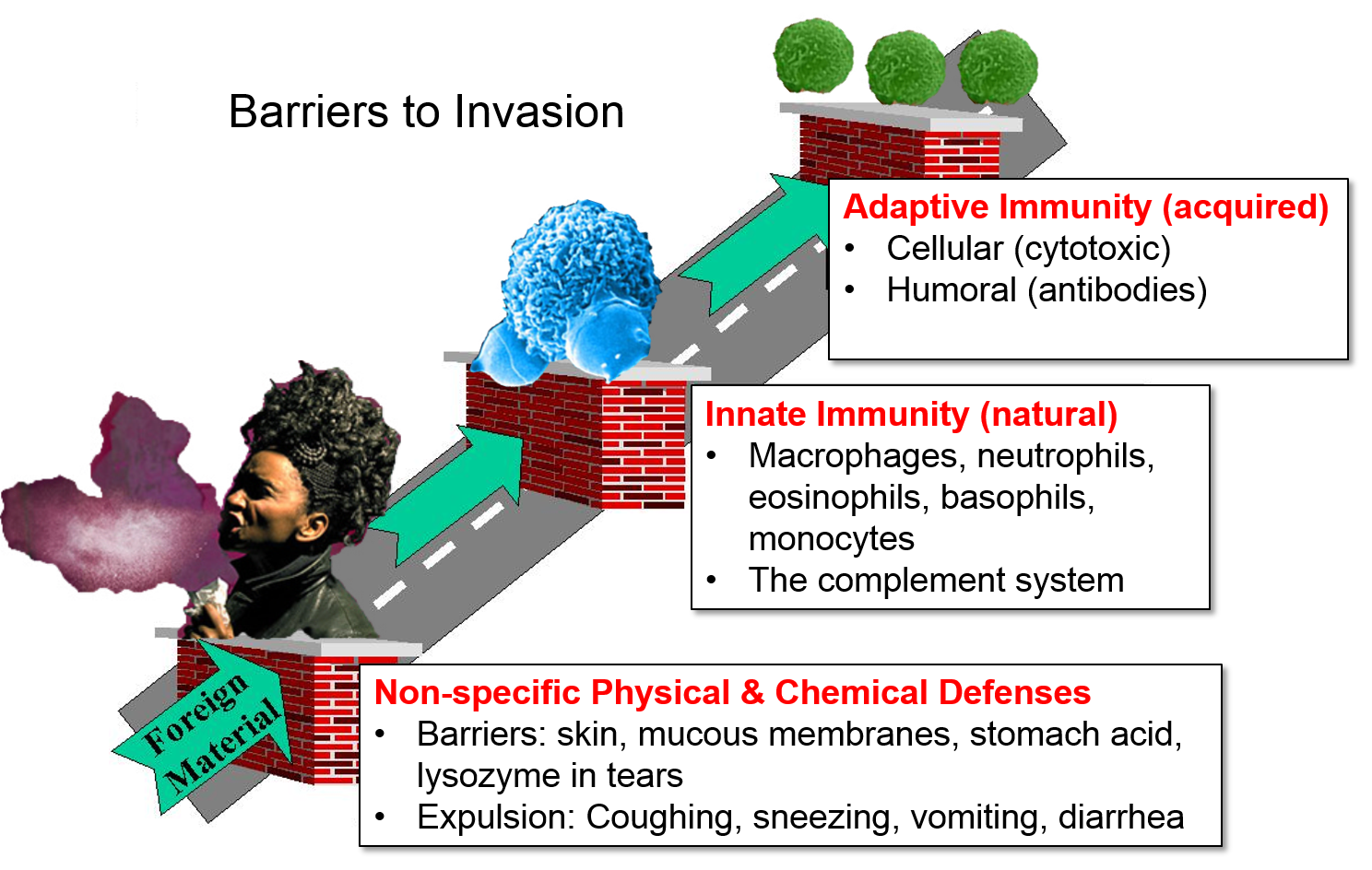 Shot clipart immunity. Defense mechanisms general nonspecific
