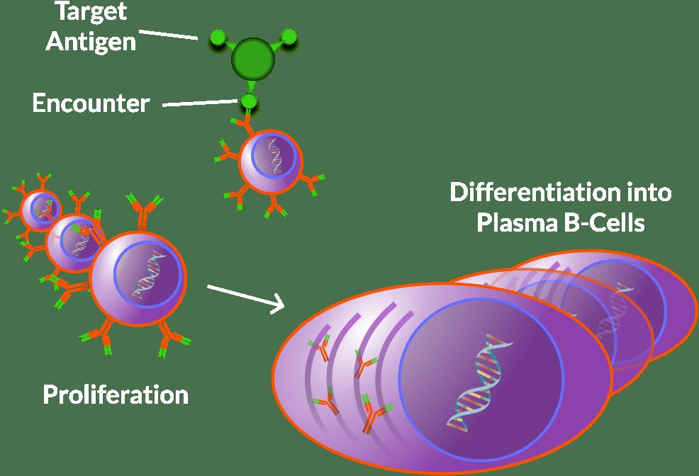 Disease clipart immune system. Trellis science these plasma
