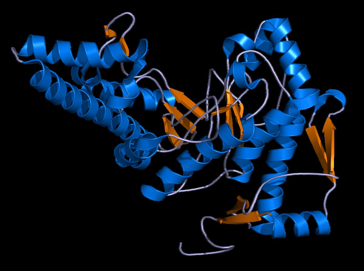 Hyaluronidase wikipedia . Germ clipart streptococcus