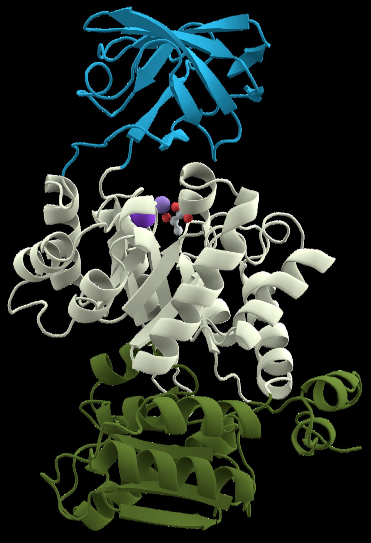 Diversity clipart domain 3. Protein wikipedia