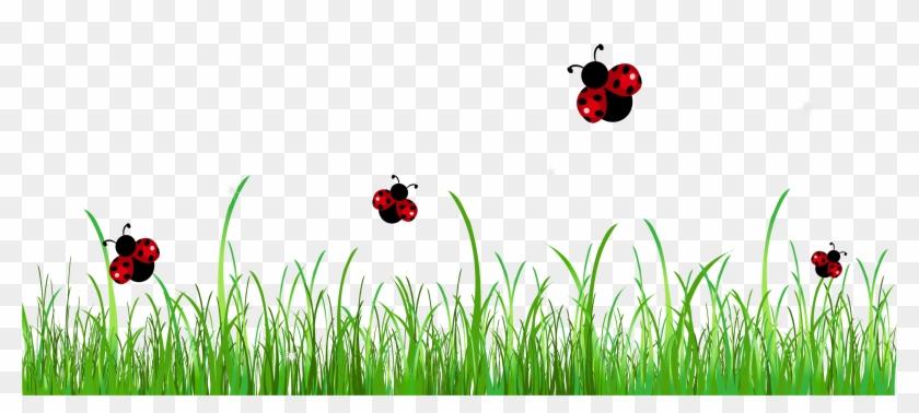 divider clipart ladybug