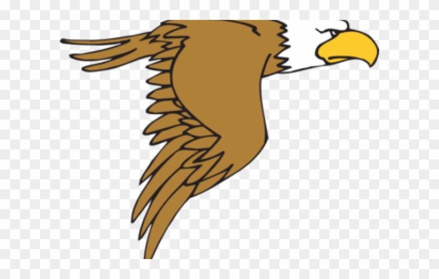 Peregrine bald eagle cartoon. Falcon clipart illustration