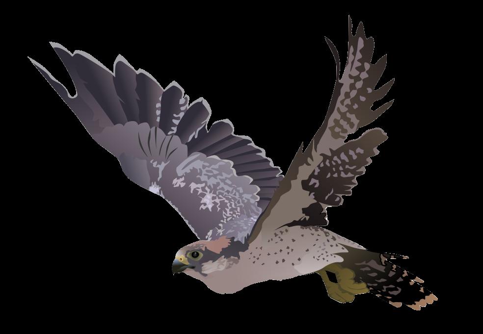 Falcon clipart flying falcon.  collection of bird