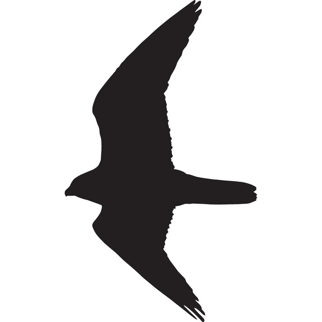 Peregrine silhouette at getdrawings. Falcon clipart bird habitat