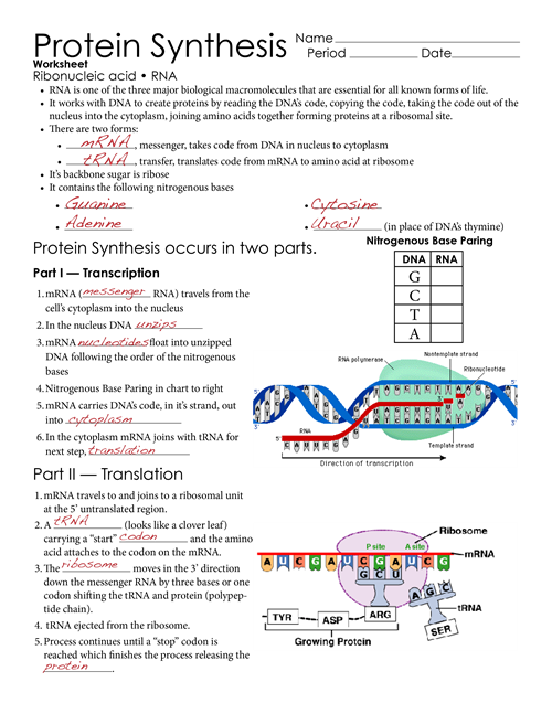 Image result for dna. Note clipart answer sheet