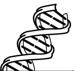 Dna clipart black and white. Free cliparts download clip
