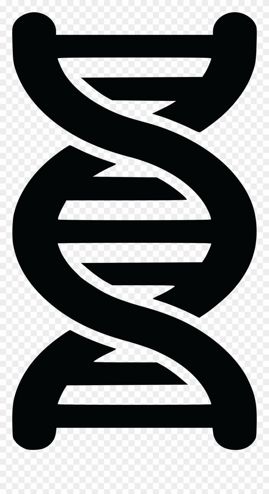 Dna clipart black and white. Free of a strand