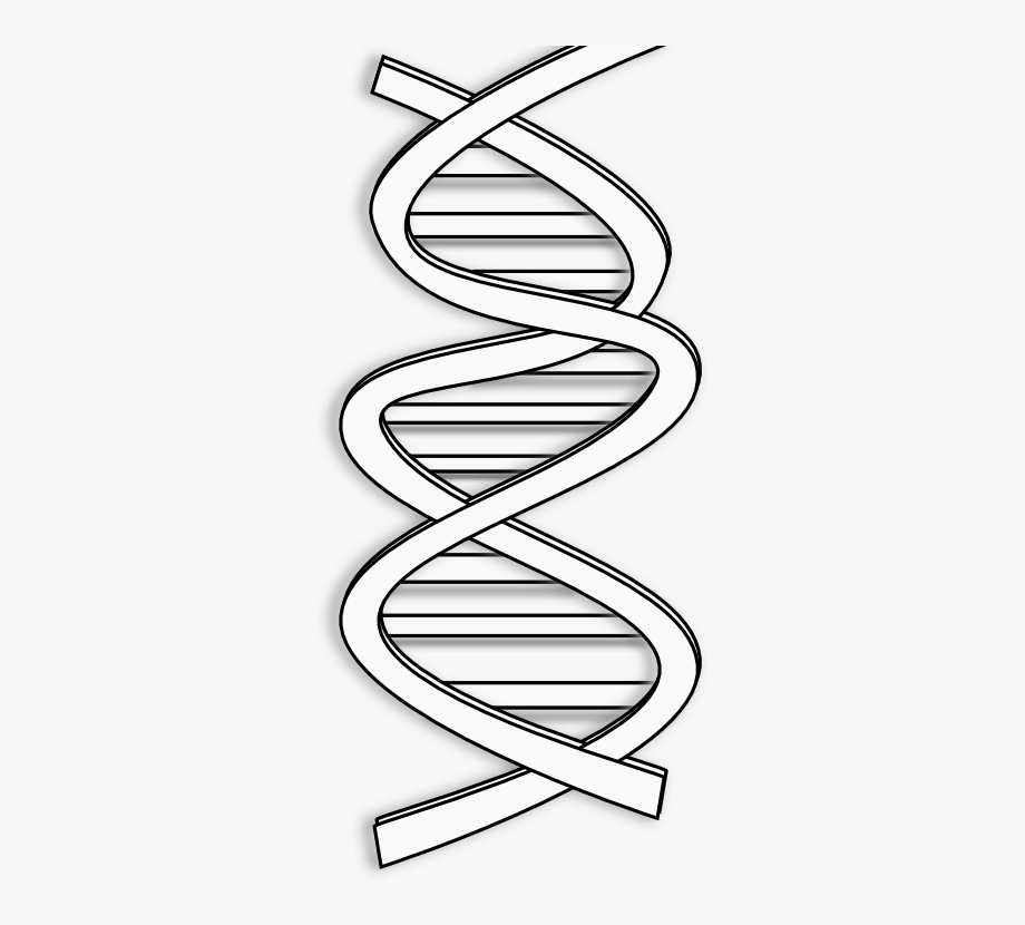 Info transparent . Dna clipart black and white