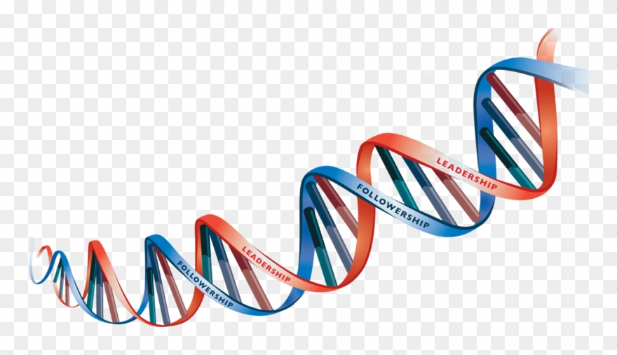 Picture free hd strand. Dna clipart dna chain