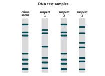 Fingerprint clipart dna fingerprint. Search results for clip