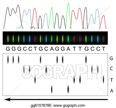 Dna clipart dna sequence. Vector illustration sequencing stock