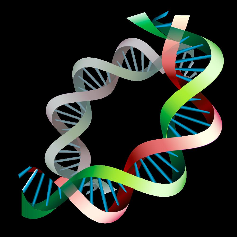 Epigenetic expression before and. Dna clipart epigenetics