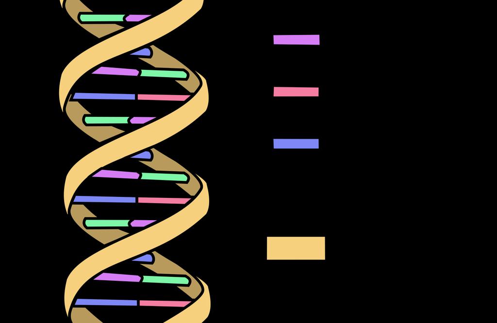 Dna clipart epigenetics. Uncategorized page biology lets