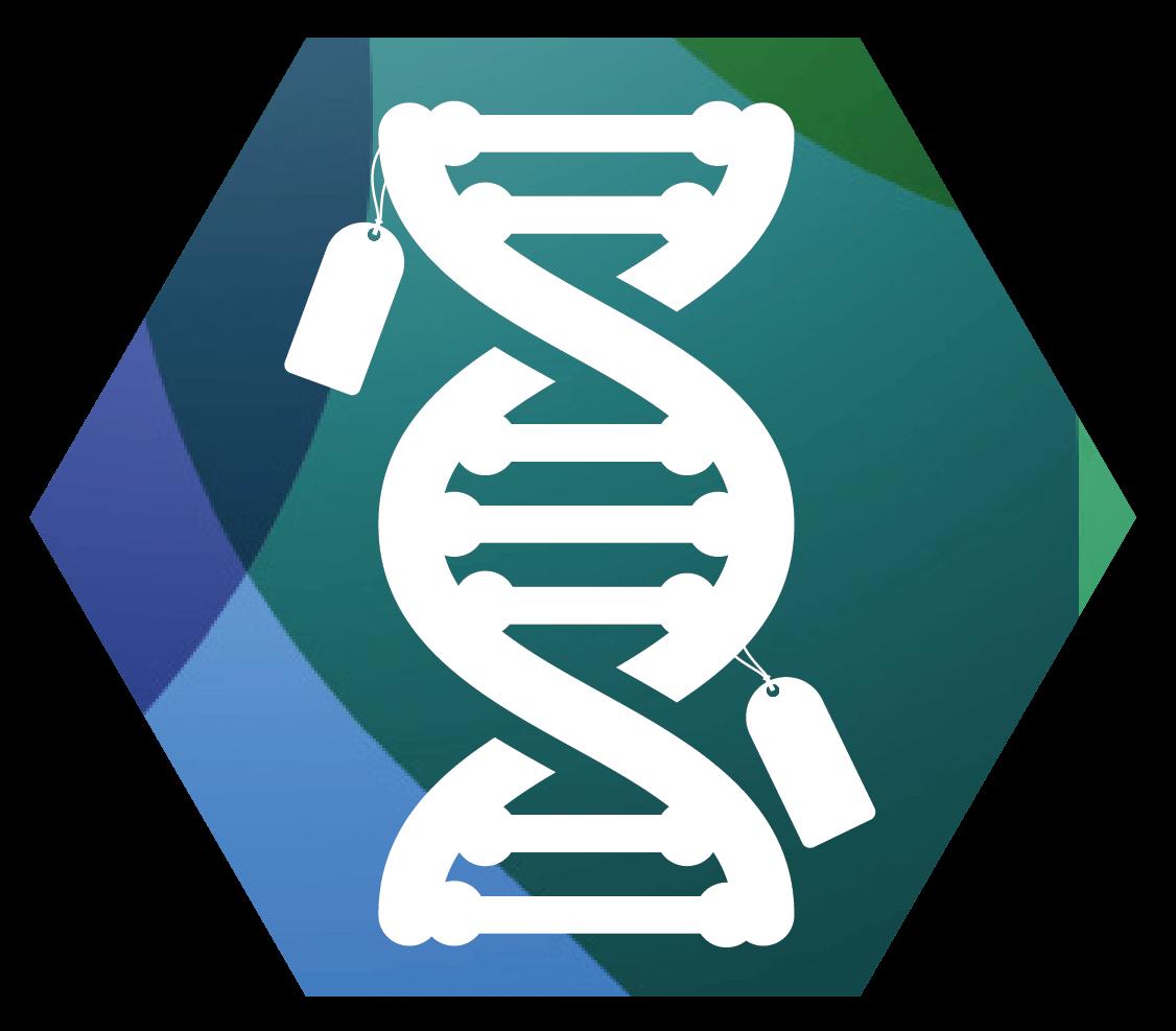 Dna clipart epigenetics. Epigeneticsrx what is epigeneticsiconsdnapng