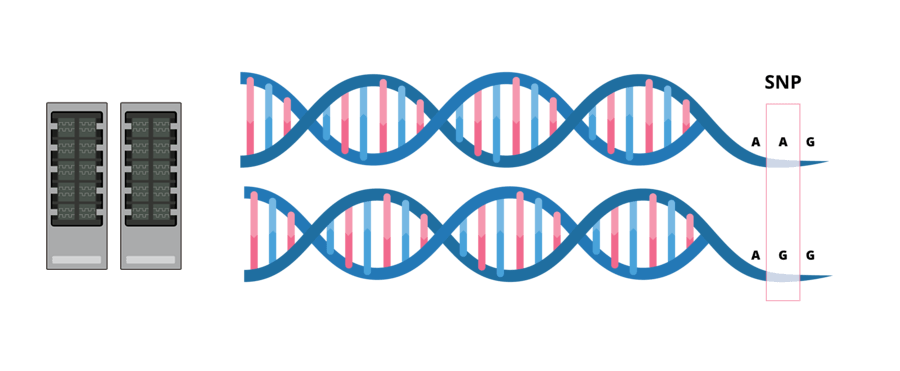 Dna clipart genotype. Research and development fast