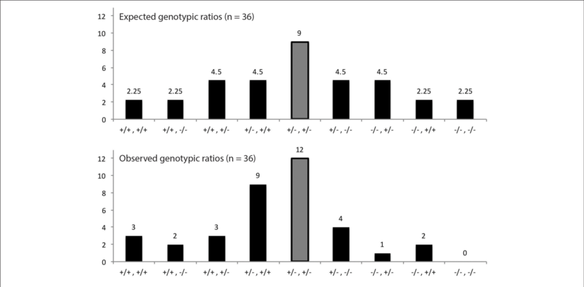 Proportion of genotypes from. Dna clipart genotype