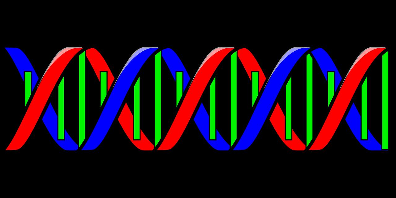 Dna clipart genotype, Dna genotype Transparent FREE for ...