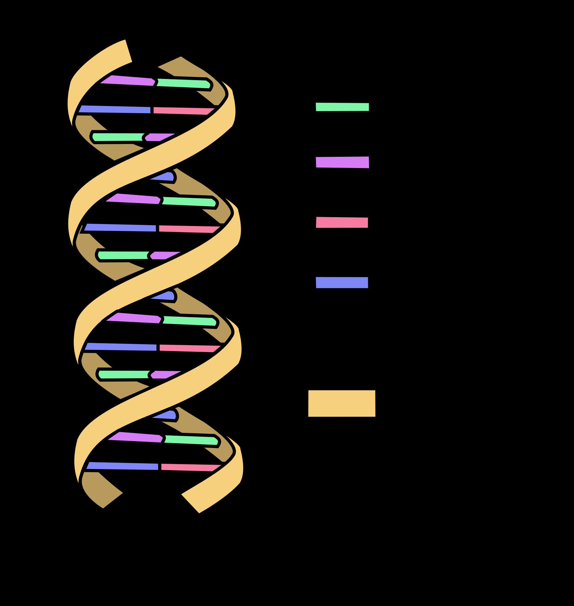 Dna clipart heredity. Oncology basics medivizor the