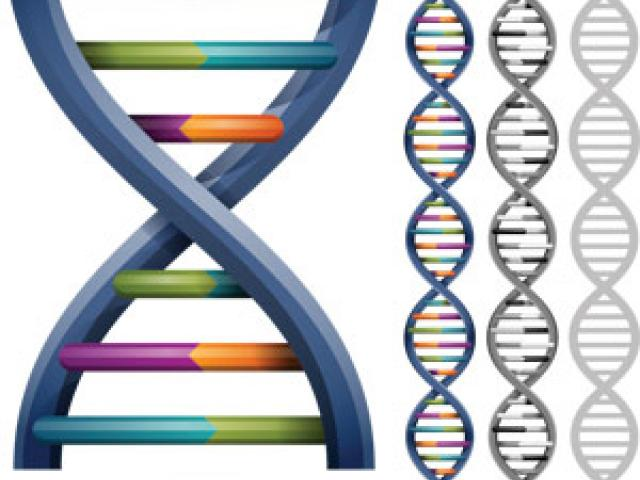 Free structure download clip. Dna clipart nature science
