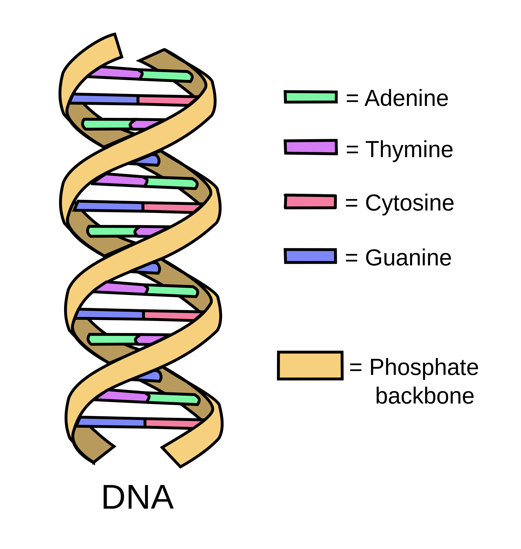 Oncology basics dna medivizor. Reflection clipart lesson learned