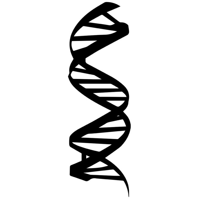 Dna clipart simple. Helix free download best
