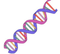 Dna clipart simple. Free cliparts download clip